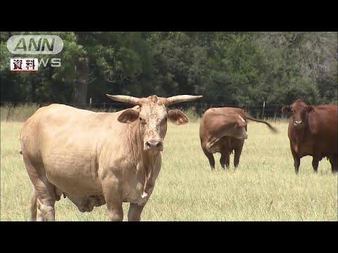 アメリカ産の冷凍牛肉の関税が一時的に引き上げへ(17/07/26)