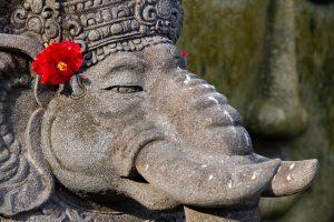 elephant-592793_640